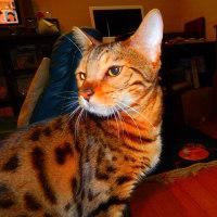 私は腱鞘炎で猫はワクチン接種