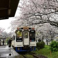 桜の駅5・・・【いな】