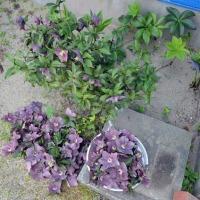131個の花
