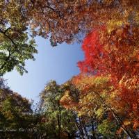 木村 肇 作品集 紅葉 日光湯の湖 -16.10.23