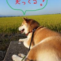 朝日と共に (*^_^*)