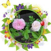 花たちに飾り枠をつけてみました