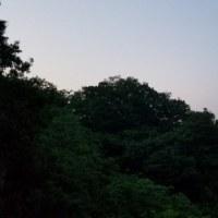 今日も朝靄を 5.30