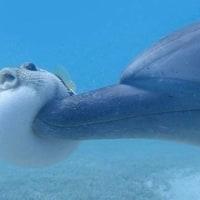 イルカとふぐ