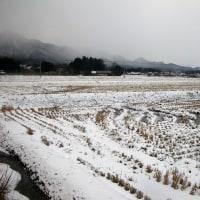 17-01-11 真冬日