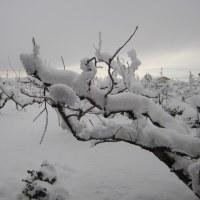 大雪の中。。。 -ネイル更新-