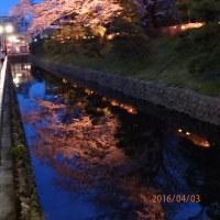 大日様の ライトアップ夜桜
