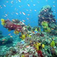 Dive No.973 Mutafushi Thila, Baa Atoll, Maldives