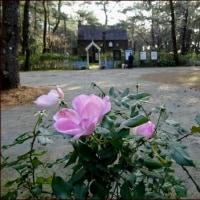 英国式庭園<南九州感動の旅(10)>