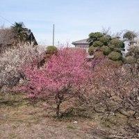 春うらら(^o^)