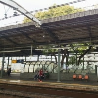 京阪萱島駅のホームの大くすの木