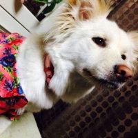 ☆里親さん募集・急募☆香川県・犬(4歳位の雑種メス)