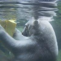 第28回八木山動物公園写真コンクールで入賞