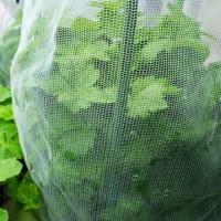 家庭菜園 プランター ミツバ栽培、10号ポット種籾の安い袋で綺麗に育った