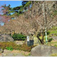 熱海梅園 (静岡県熱海市梅園町)(3の1)★ 2017.01.17 ★