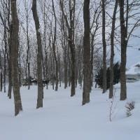 雪景色しかない!!