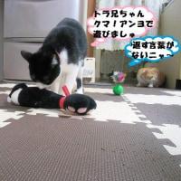 トラ!困ったニャ~・・・😹