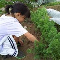 農作物の成長。