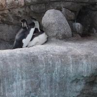 ペンギンのケンカ