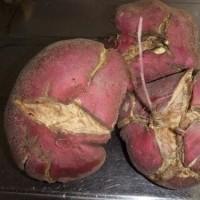 不細工なサツマイモ
