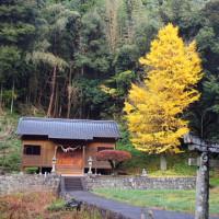 訪問活動で見た銀杏の紅葉