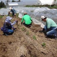 農業実践教室第22期:4回目~ズッキーニの定植、ピーマンの定植