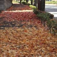 落ち葉の秋♪