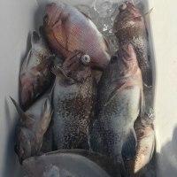 真鯛釣り3週連ちゃん