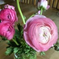 トレジョーで買ったお花