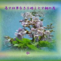 『 為す仕事なきを好しとす桐の花 』筑紫風交心rs2703