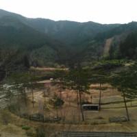 ヤマセミ温泉キャンプ場の木を切った