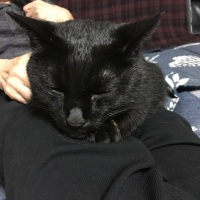 久しぶりの母上の膝を堪能するレオ