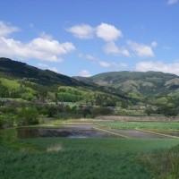 遠野の初夏に見る緑のコントラスト