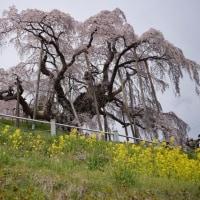 ココロのリフレッシュ-三春の滝桜と那須温泉神社