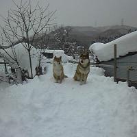 雪のち曇り時々晴れ