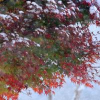 11月24日 紅葉に初雪