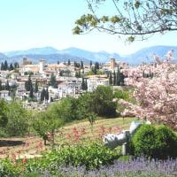 本日の写真【春のスペイン・グラナダは花がいっぱい vol.1】