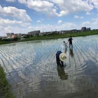 さいたま丸ヶ崎大西農園~田んぼ草取りツアー 草取りは楽しいのだ!