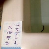 ムカデさま入浴中♨