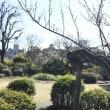 羽根木公園の梅祭り