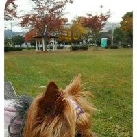 公園に行ってきました