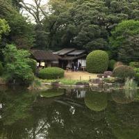 東京物語(庭園)その2