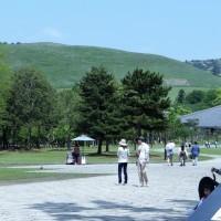 534.奈良公園・・・・シカの写真ばかりになった!