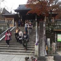 ワンコと伊豆旅行  修善寺とお宿編