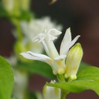 白秋~白い花