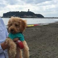 江ノ島 、七里ヶ浜フリーマーケット
