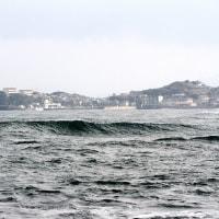 2/26探鳥記録写真(狩尾岬の鳥たち:ホオジロ、ダイゼン、ウミアイサ他)