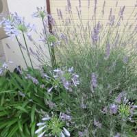 我が家のささやかなお花に癒されながら・・・(奮闘中です)