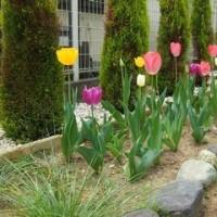 4月の庭の花