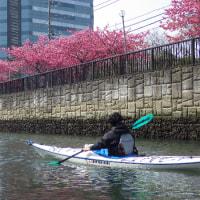 2017年度:東京水路カヤックツアー(桜シーズン)のお知らせ